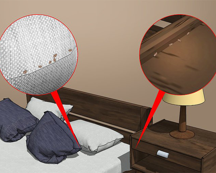 Preventing Bedbugs – Tips For Property Managers