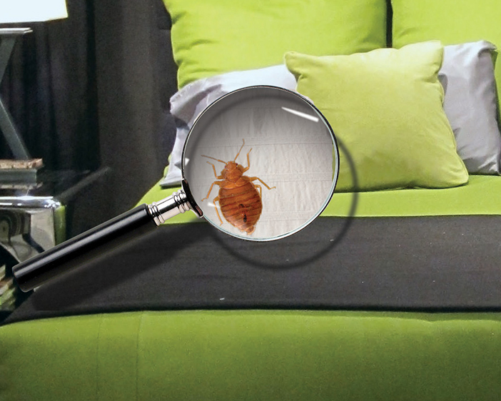 The Ultimate Bedbug Guide