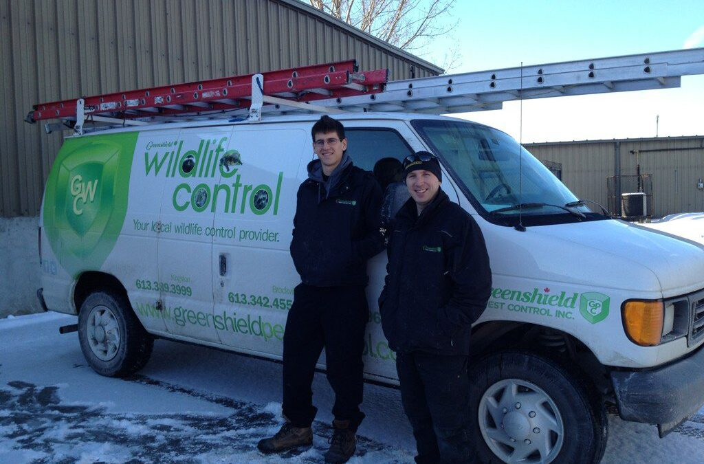 What to Look For In A Wildlife Company