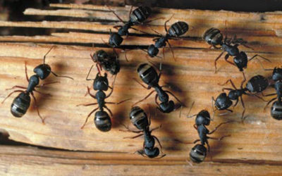 The 5 Worst Problems Caused By An Ant Invasion