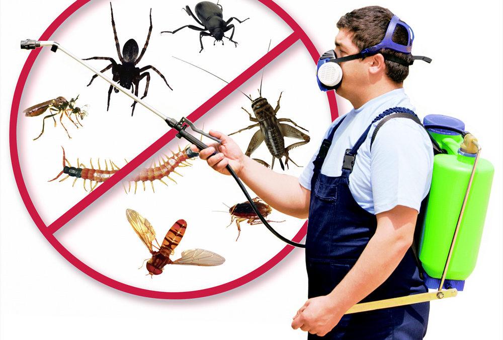 Exterminator – Transition Into Pest Control