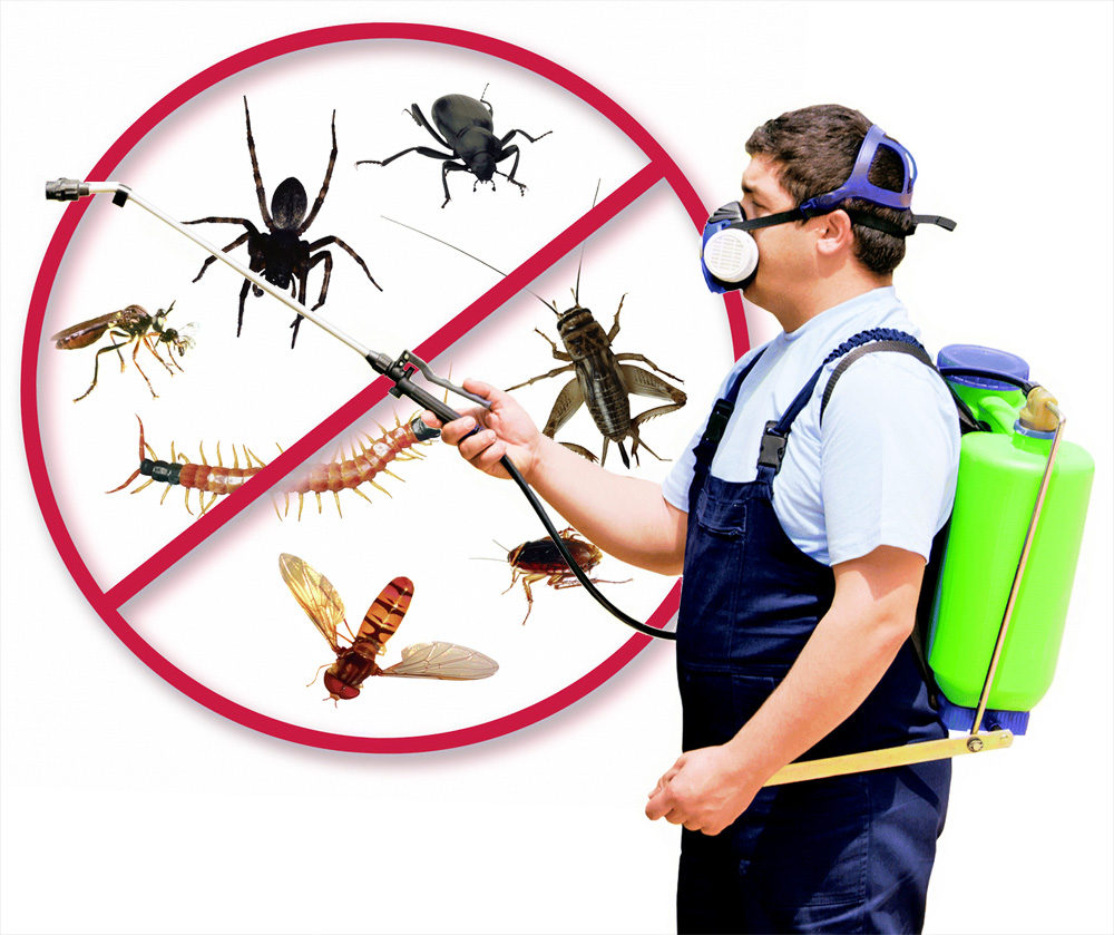 Exterminator – Transition Into Pest Control