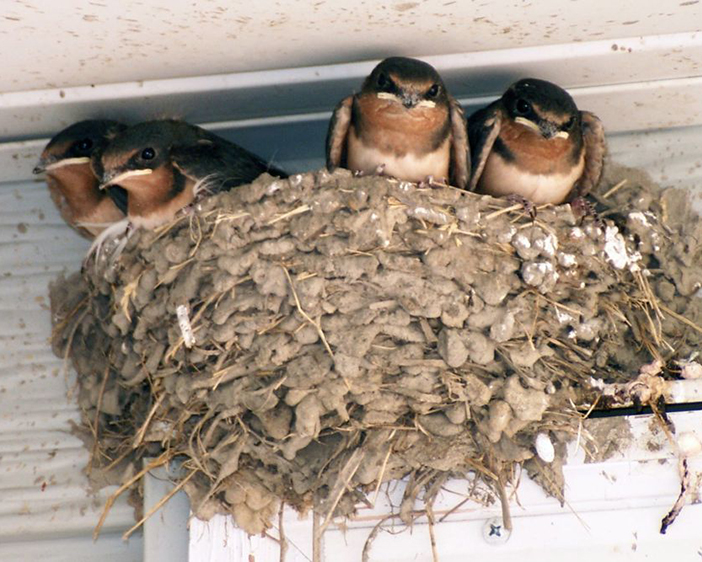 Helping Clients Reach Long Term Bird Solutions