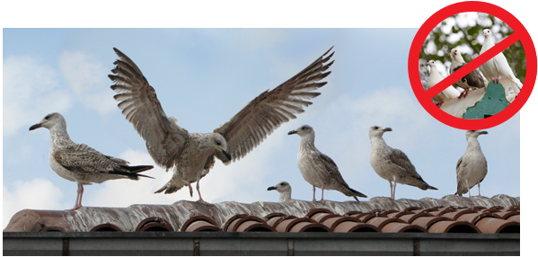 3 Reasons Why You Want To Control The Birds On Your Buildings