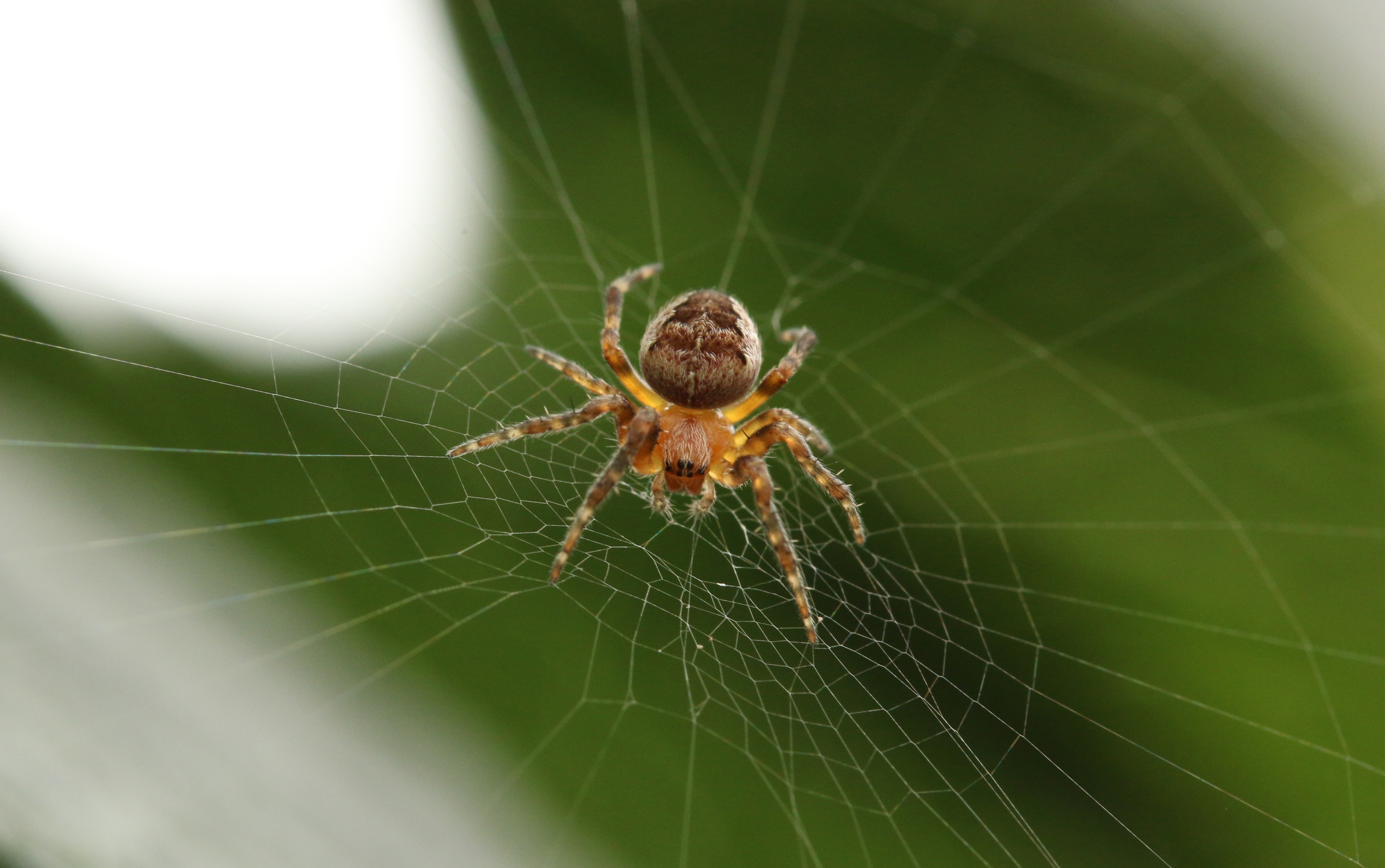3 Hunters To Make You Feel Sorry For Spiders