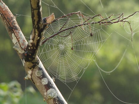 3 Interesting Facts About Spider Webs