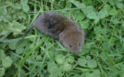 Mouse Removal Picton