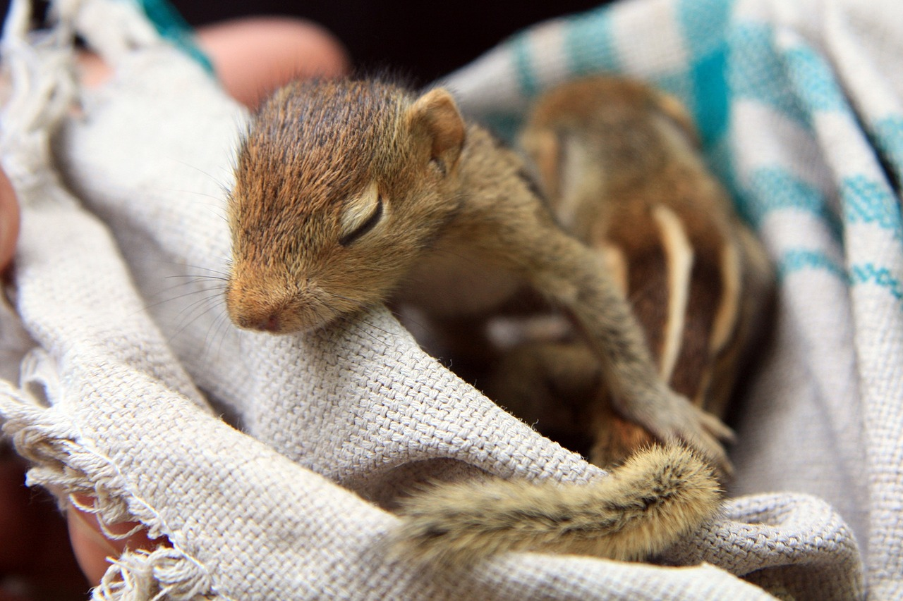 Spring Means Baby Squirrels: Keep Your Home Squirrel Free!