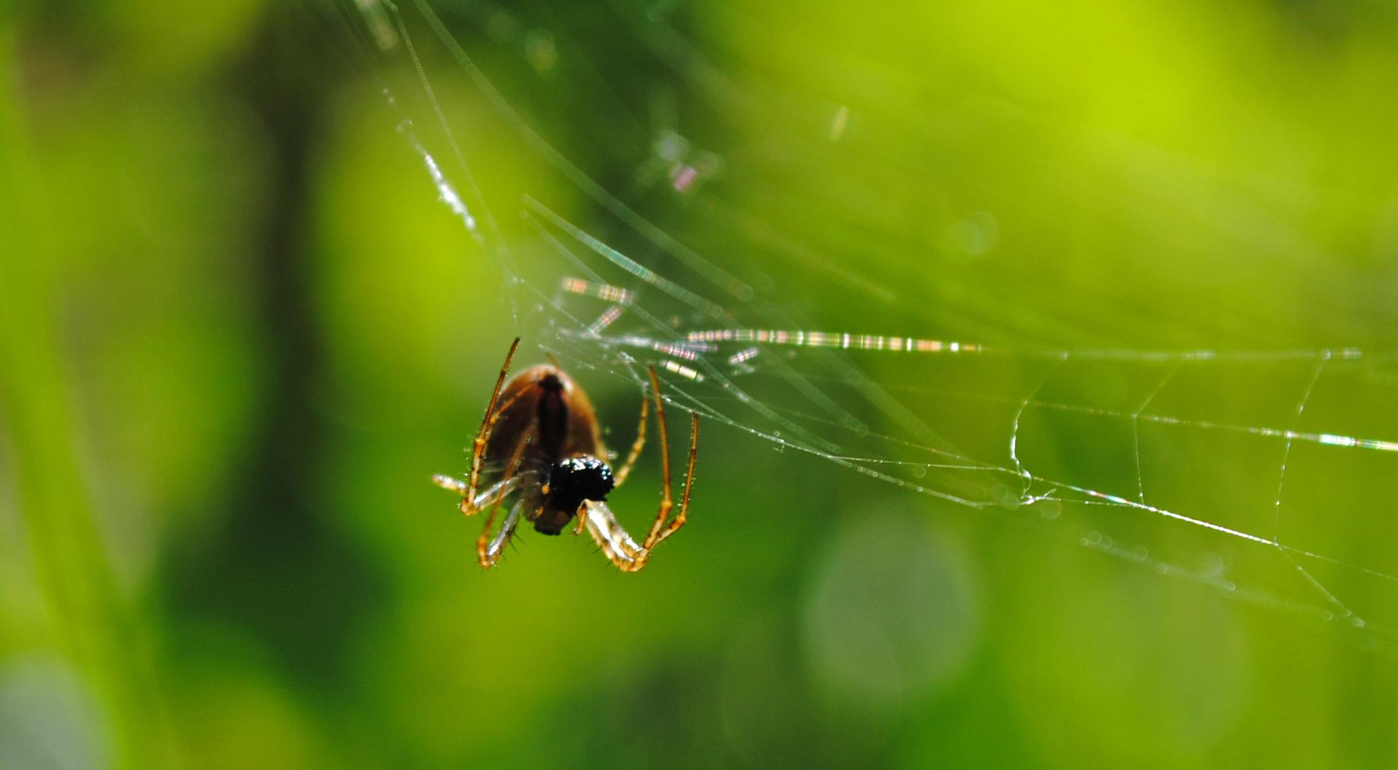 Spider Control Gananoque
