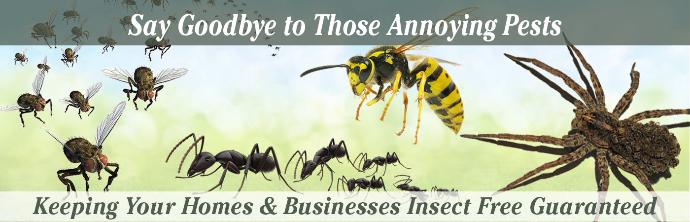 Website Banner Images Full Size NEW! Home Page Pests