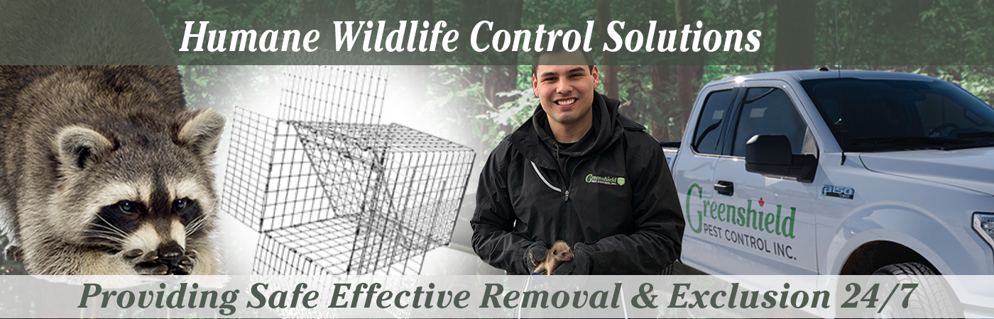 Website Banner Images Full Size NEW!-Wildlife Services Page