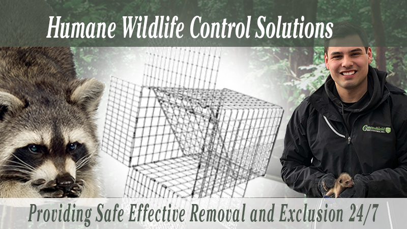 Website Banner Images Mobile Size NEW!-Wildlife Control